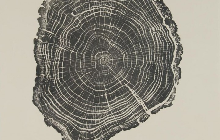 BRYAN NASH GILL -THE TANGIBLE LIFE OF THE TREES