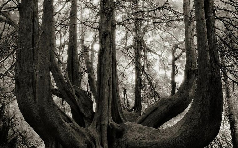 BETH MOON: PORTRAITS OF TIME