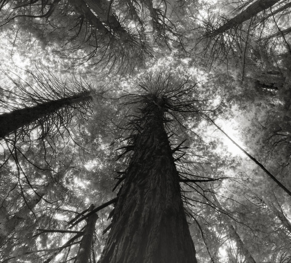 Beth Moon - Ancient Trees Portraits of Time, 2001-2015 King's Canyon