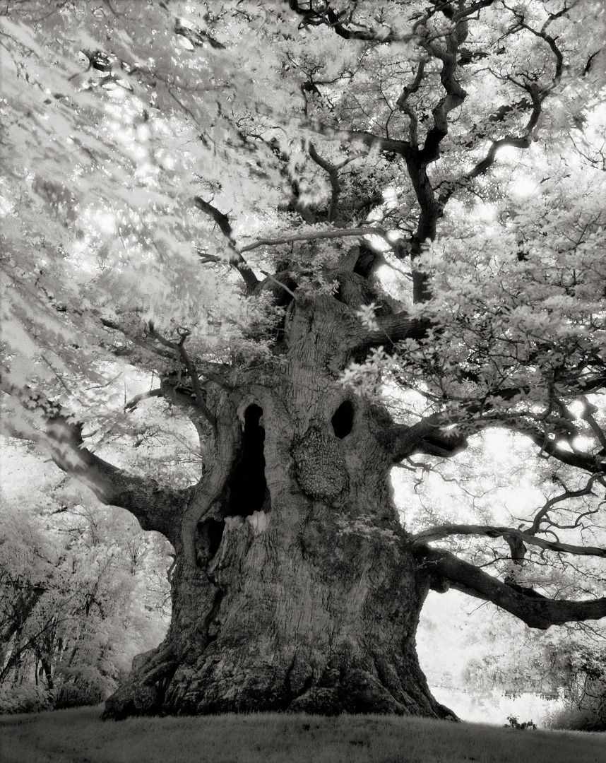 Beth Moon - Ancient Trees Portraits of Time, 2001-2015 Majesty