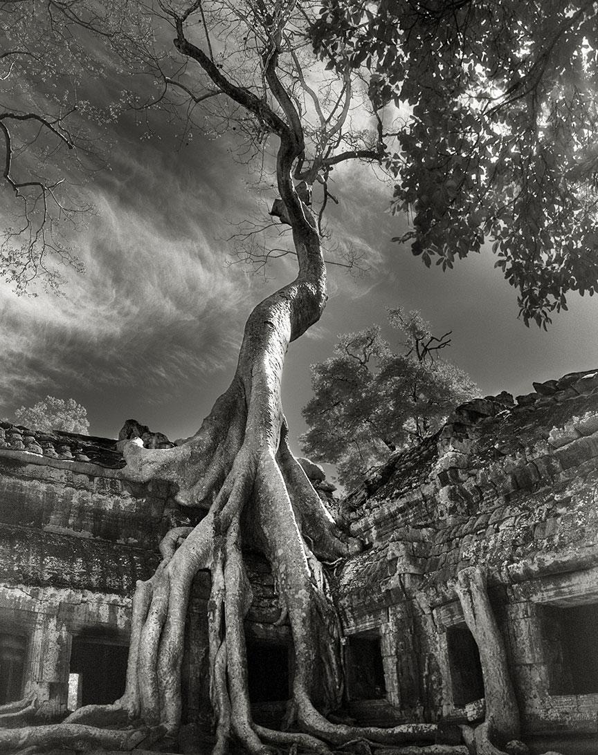 Beth Moon - Ancient Trees Portraits of Time, 2001-2015 Rilke's Bayon