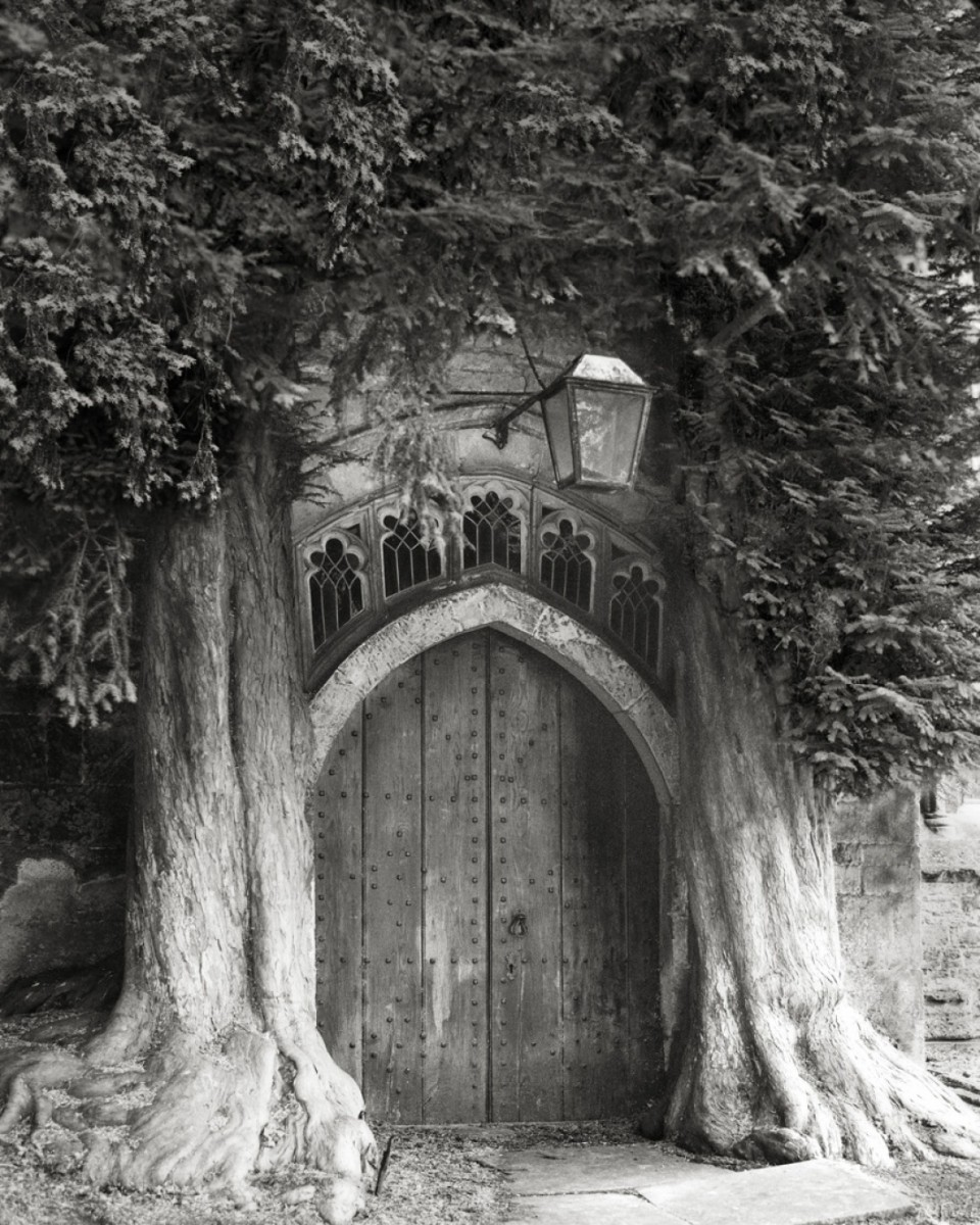 Beth Moon - Ancient Trees Portraits of Time, 2001-2015 Sentinels of St Edwards