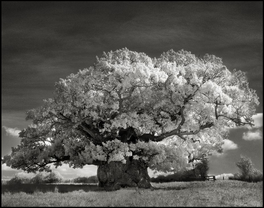 Beth Moon - Ancient Trees Portraits of Time, 2001-2015 The Bowthorpe Oak