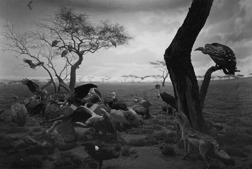Hiroshi Sugimoto - Dioramas, Hyena-Jackal-Vulture, 1980