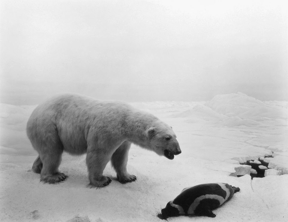 Hiroshi Sugimoto - Dioramas, Polar Bear, 1976