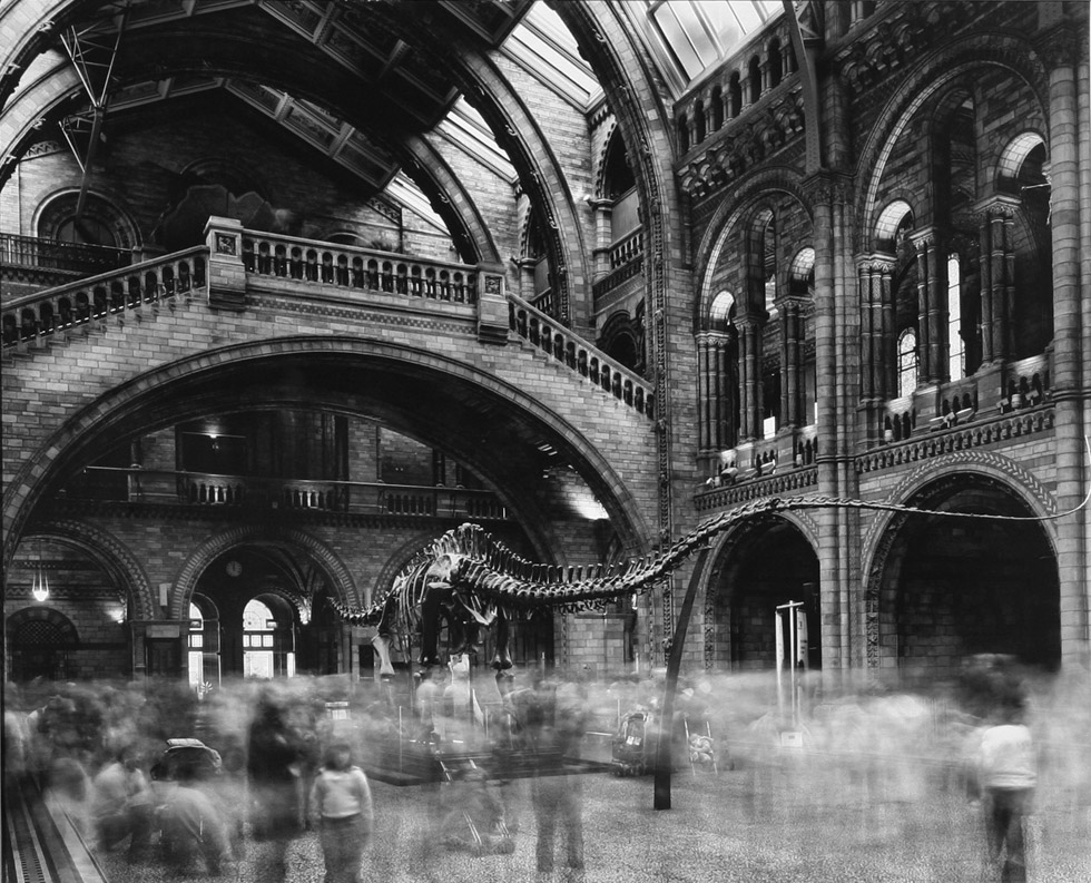 Matthew Pillsbury - Time Frame, Diplodocus Museum of Natural History, 2013