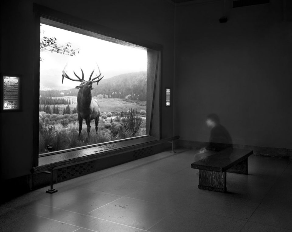 Matthew Pillsbury - Time Frame, Self portrait contemplating Wapiti, Museum of Natural History, 2013